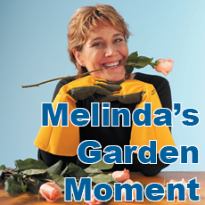 Melinda's Garden Moments is heard Mon.-Fri. at 7:45 and 10:45 a.m. and 4:45 p.m. on 97.9 WHAV.