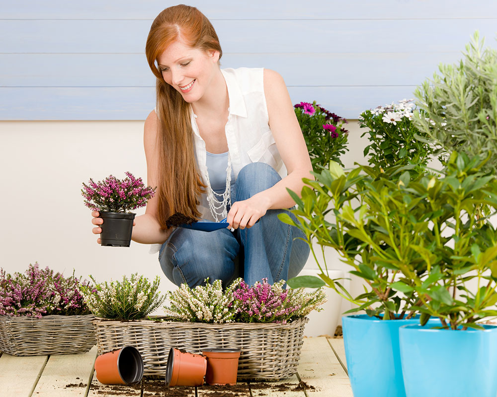 Haverhill Garden Club Seeks Monthly Nominations for Garden of the Month Designation