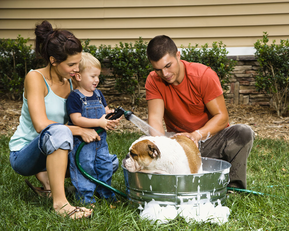Salem Animal Rescue League Seeks Pet Photos for Contest; Deadline is July 31