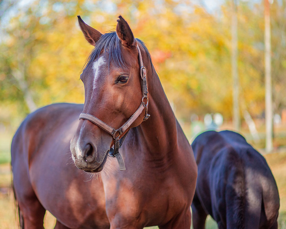 Windrush Farm Again Offers Kathy Blanton Memorial Scholarship for Therapeutic Riding Session