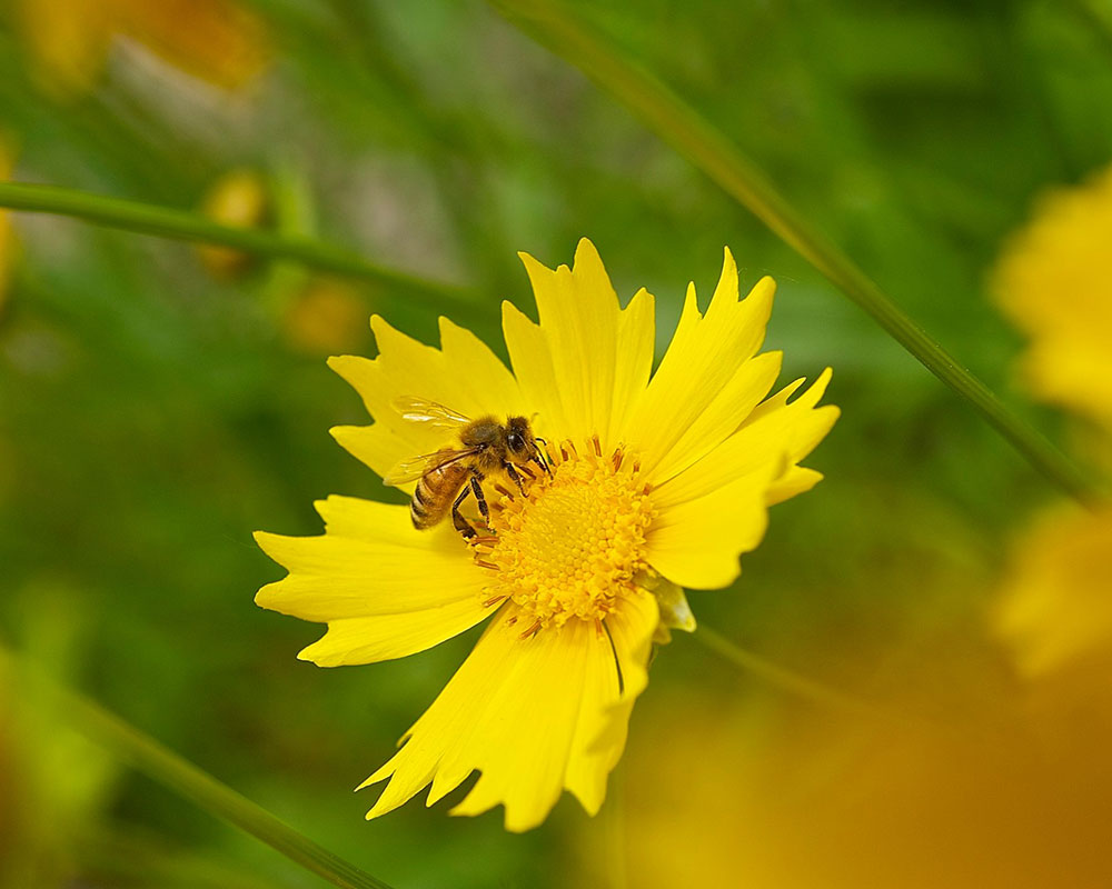 Haverhill Garden Club Hosts Free Webinar on Turning Yards into Havens for Pollinators
