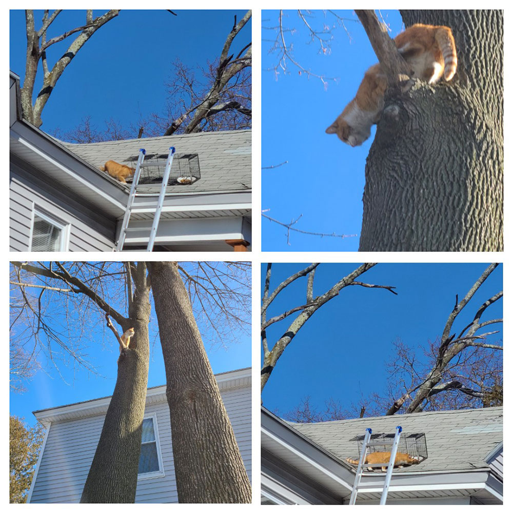 Methuen Group Effort Rescues Three Cats From Roof on One of the Coldest Days