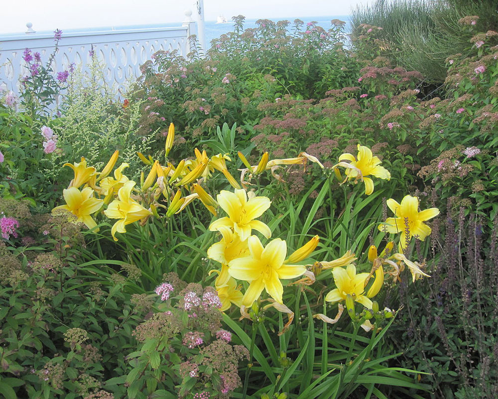 Haverhill Public Library Presents Master Gardener Keohan Discussing Daylilies May 11