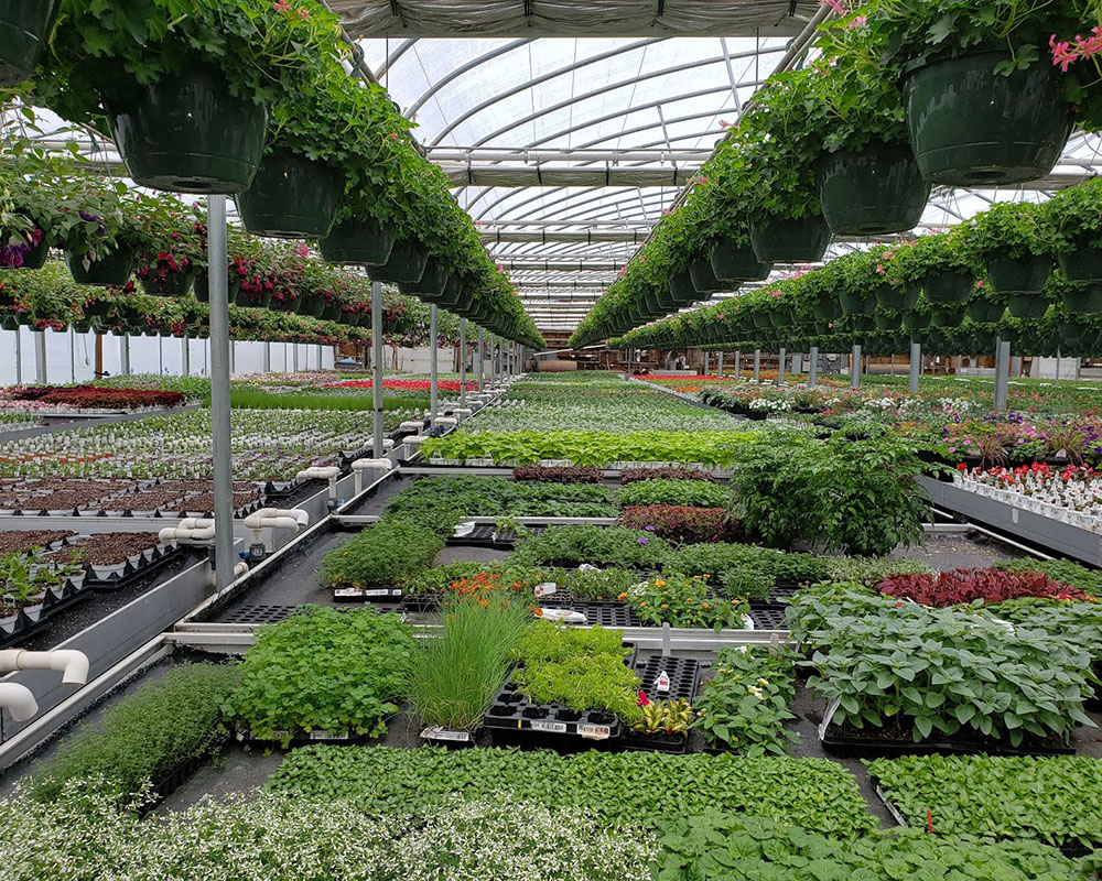 Greater Haverhill Chamber Plans First In-Person Mixer Tuesday at Nunan's Florist and Greenhouses