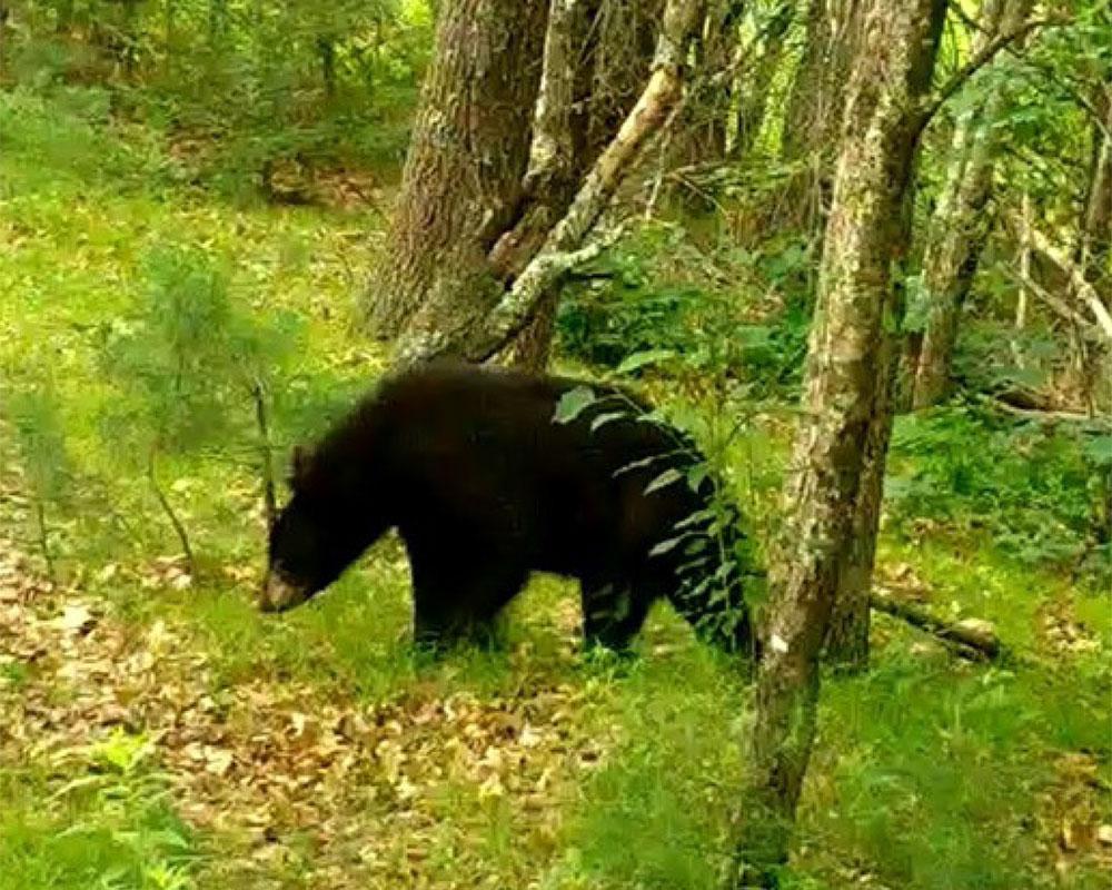 Online Presentation Tonight Discusses Protection for Plaistow, N.H.'s Wildlife Habitat Corridors